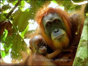 A mother orangutan & her infant