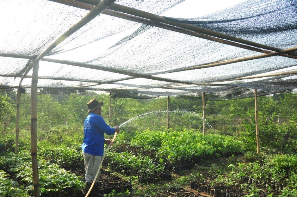 Tree nursery and seedling maintenance
