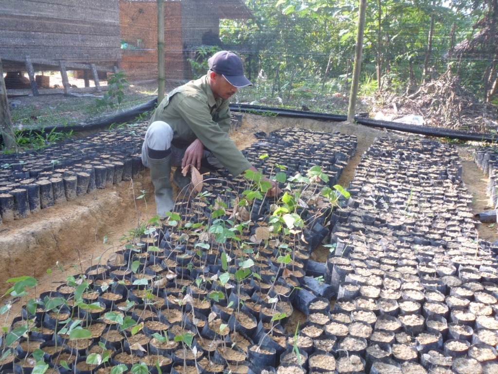 Thousands of seedlings are nurtured then planted