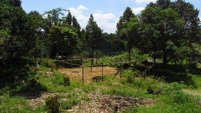 Nursery for 30,000 tree seedlings