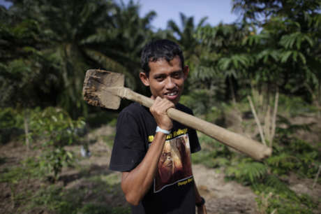Replanting Rainforest in Sumatra, Indonesia