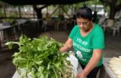 Strengthen 60 Women Farmers in El Salvador