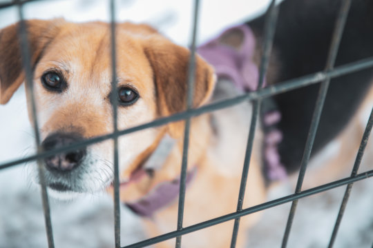 Stop The Culling of Dogs & Cats in Japan