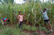 Youth Farming to Eliminate Hunger in Rural Nigeria