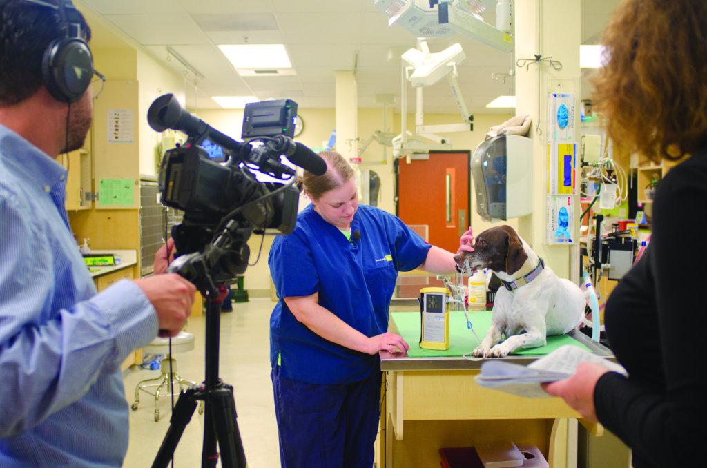 Making Headlines in Veterinary Practice News