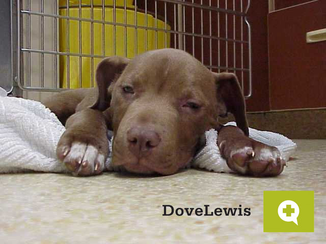 Save Thousands of Animal Lives in Oregon