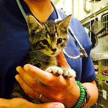 Kitten Rescued from St. John's Bridge