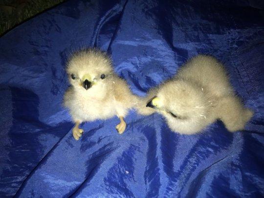 A couple of newborns