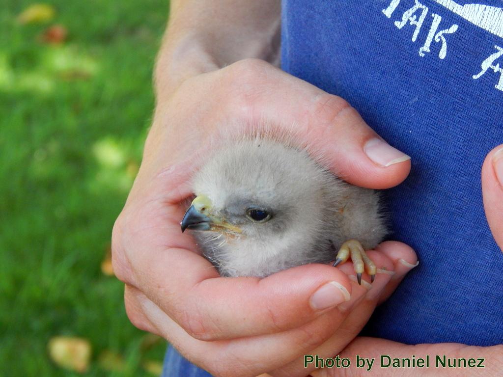 The new born chick!