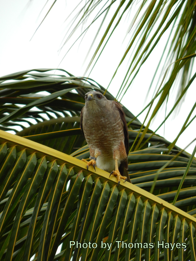 AV (the male) perched near the nest