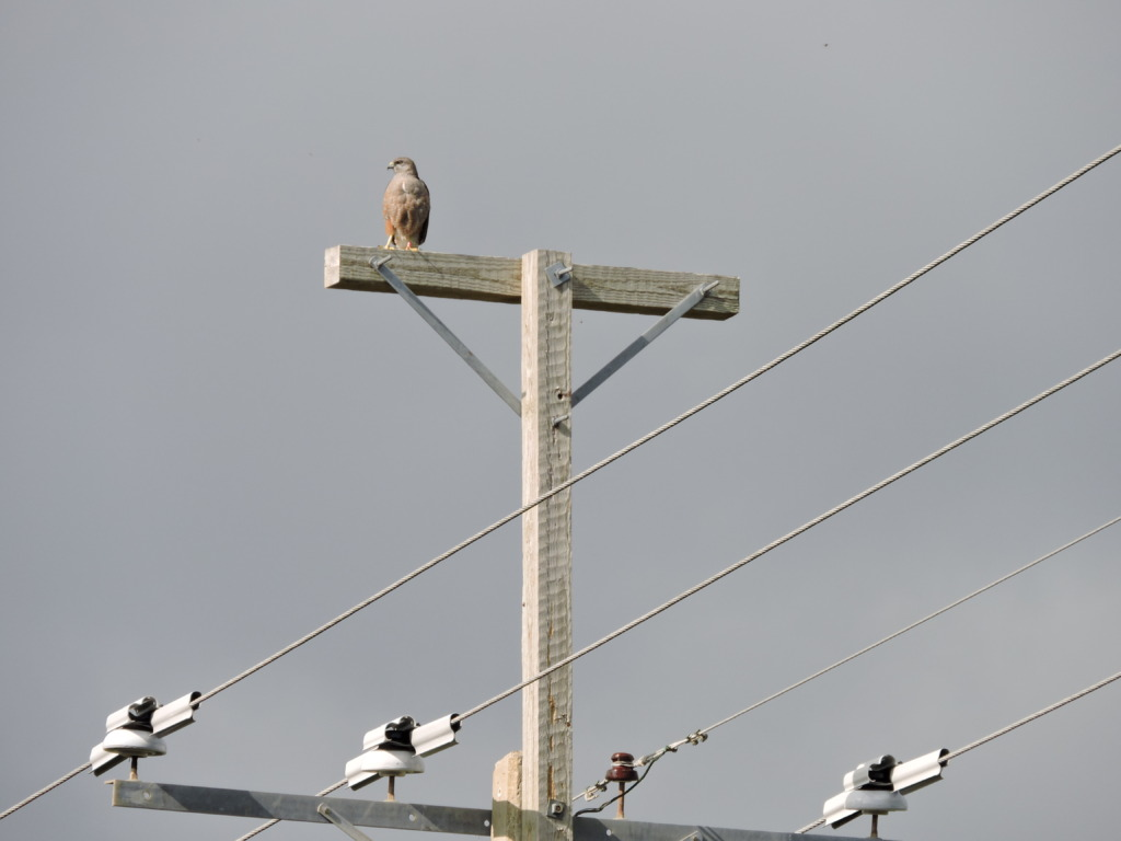 Our efforts to protect power lines have paid off