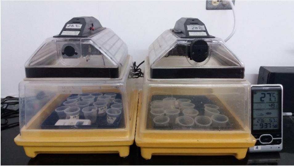 Testing the effectiveness of an entomopathogenic.