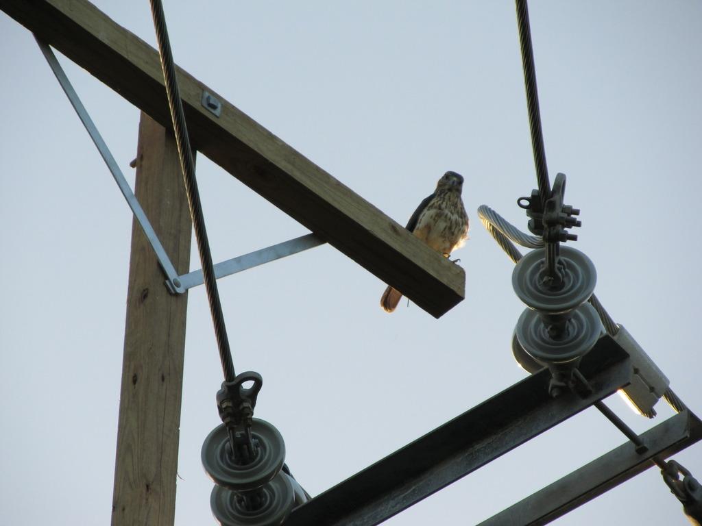 safety perch. Courtesy of Thomas Hayes