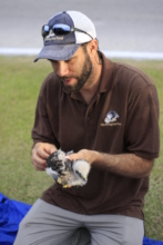 Thomas Hayes - Ridgway's Hawk Project Director
