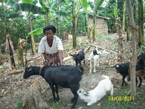 Jackline with her goats