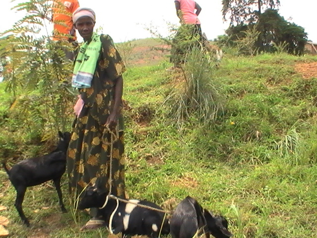 Harriet Nakaweesi holding her goats