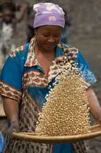 Shaking Corn