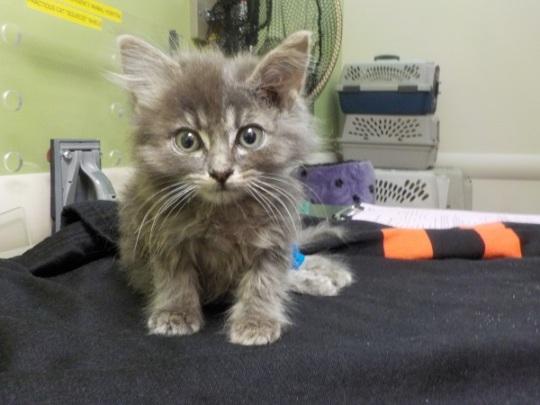 Stray Kitten with leg injury