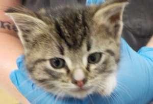 Abandoned 8 week-old kitten