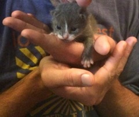 1 week-old kitten found abandonded in a garbage ca