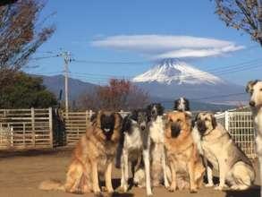 Japan Animal Therapy Association