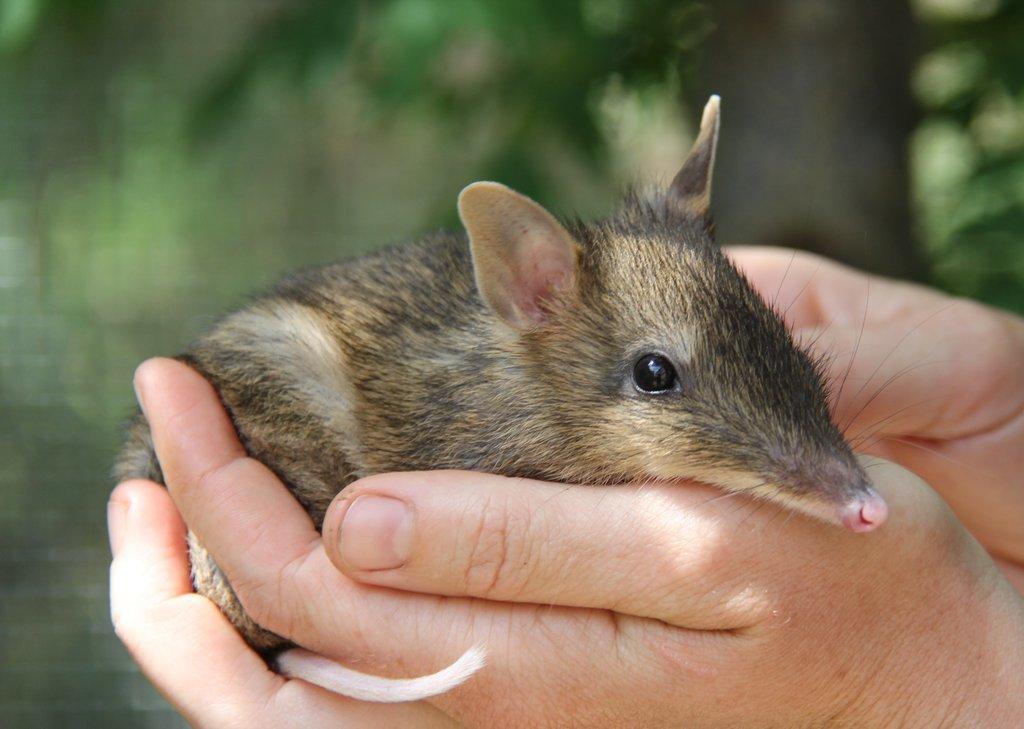 Conservation Volunteers Australia