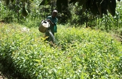 Promote Eco-Friendly Farming in Kenya.