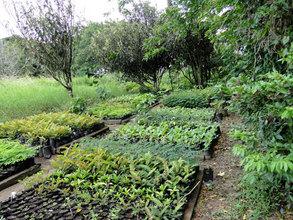 La Reserva seedling nursery