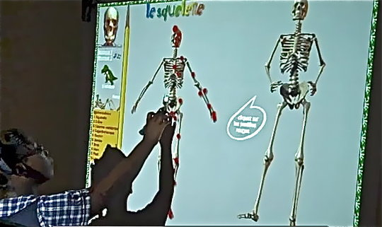 Skeleton lesson with interactive board