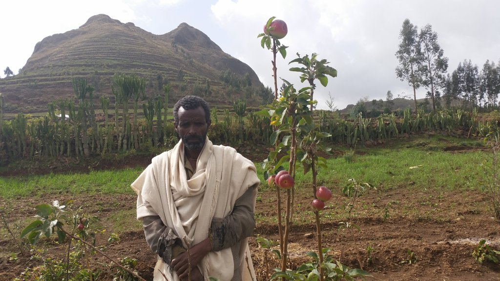 Ato Hailemariam around the houshold apple