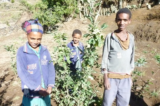 These Kidanu kids are proud of their fruit