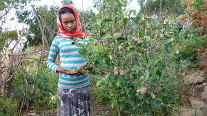 Hiwot, a 10th grader and her apple tree