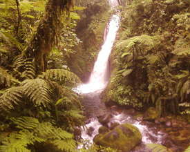 The beautiful Colibri Cloudforest