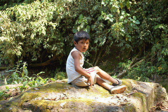 Help community efforts to protect Peruvian Forests