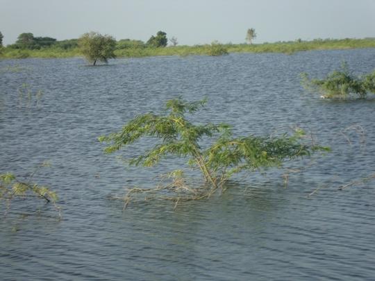 5 to 8 feet deep flood water in lands