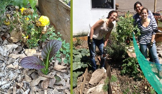 We transformed an old dump in fertile soil