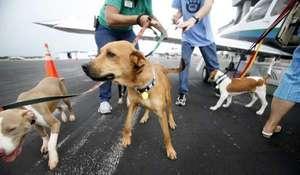Grant made to SPCA Animal Relief Program