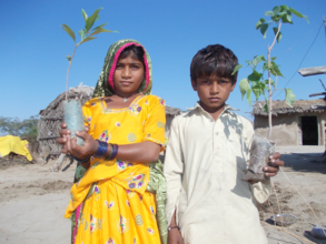 Children love to plant trees at their house