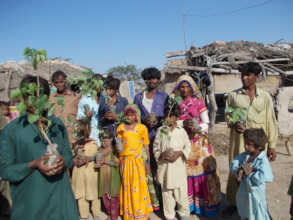 Trees distributed in poor families in 2016-2017
