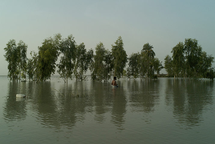 Flood affected tree planation