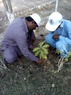 AHD staff during demonstration tree planting