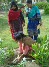Tree plantation for new office