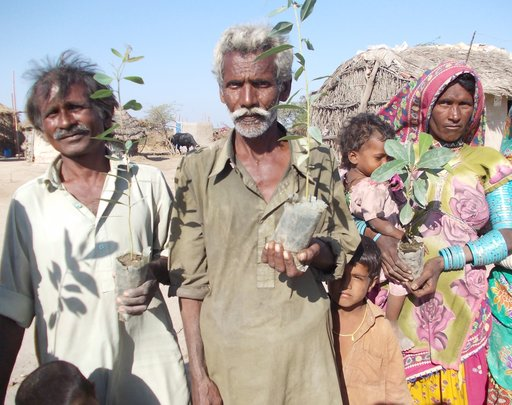Trees distribution in farming families