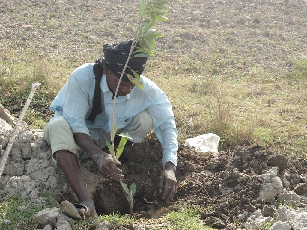Green Pakistan by Plant a Tree & Install FES Stove