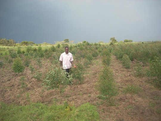 Promote Planting of 500,000 Trees in Tororo Uganda