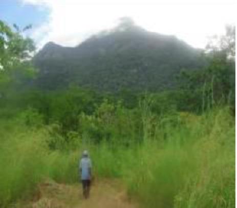 Kaeco group forest borders Kanga FR