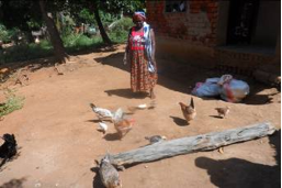 VSLA member used loan for Livestock