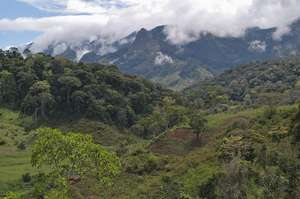 Tanzania's Eastern Arc rainforest