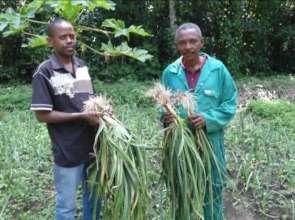 Harvesting from Garden