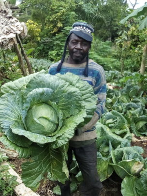 A happy Biakato Farmer with cabbage harvest
